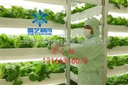 建造有机蔬菜保鲜冷库多少钱一平米?